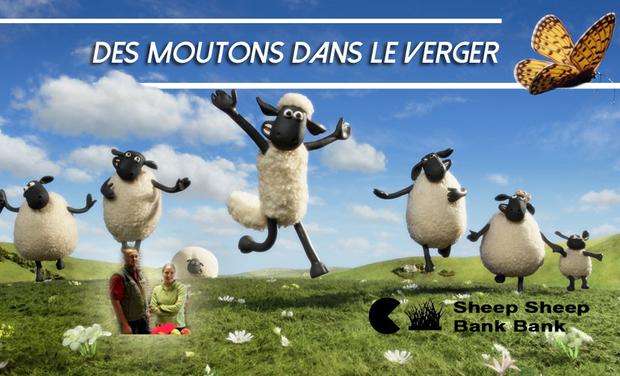Des moutons dans le verger