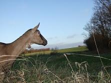 Tomme de chèvre au lait cru BIO aux orties - Ferme de la Caillonnière - morceau de 250g