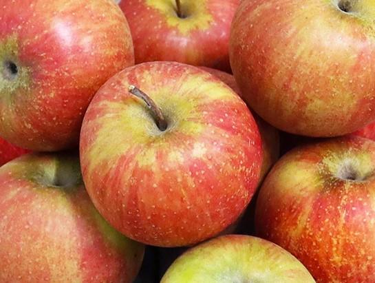 Pommes BIO - Pilot (acidulée/sucrée) - 8kg