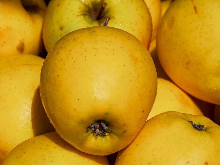 Pommes GOLDEN - calibre 136 - 5 kg