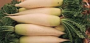 """Navet long blanc - """"Radis japonnais"""""""