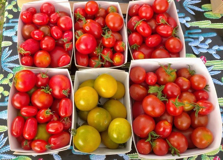Tomates cerises & Coktail BIO - 250g - Voir variétés ICI