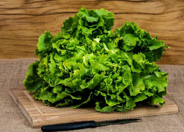 Salade Endive (BIOLAND Endivien)