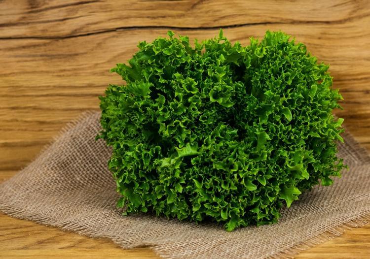 Multileaf Salade verte (BIOLAND Multileaf grün)