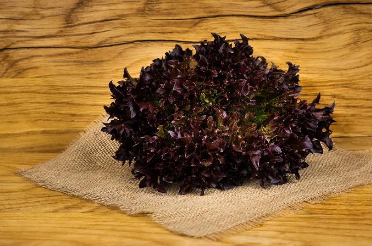 Multileaf salade rouge (BIOLAND Multileaf rot)