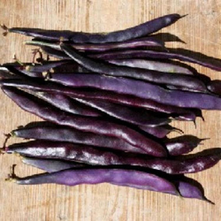 Haricot vert (violet)