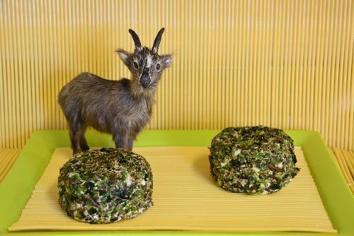 Chèvre aux algues