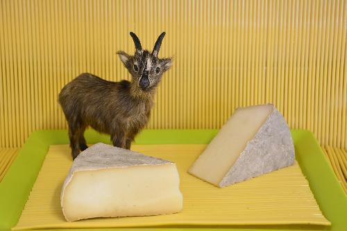 Tomme de Chèvre