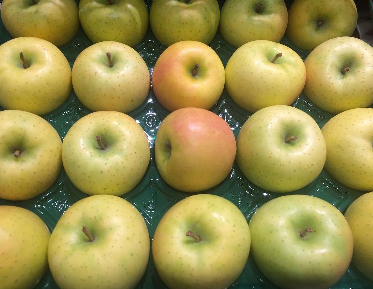 Pomme Reinette grise du Canada (Stephan)