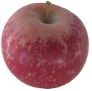 Pomme Cripp's Red