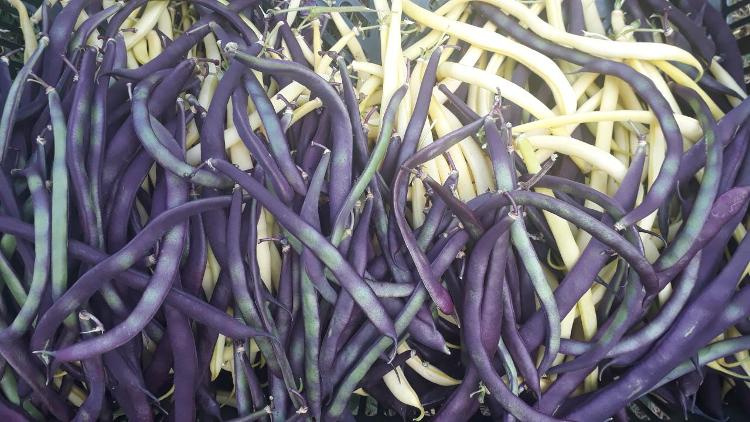 Haricot violet (Noa)