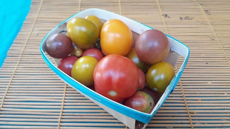Tomate mélimélo(Noa)