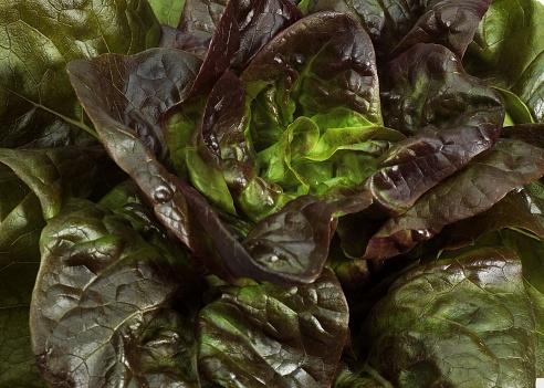 Salade Rougette catalane (Vincent)