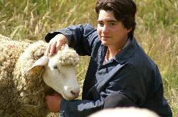 détail agneau
