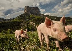 Rôti de porc dans l'échine