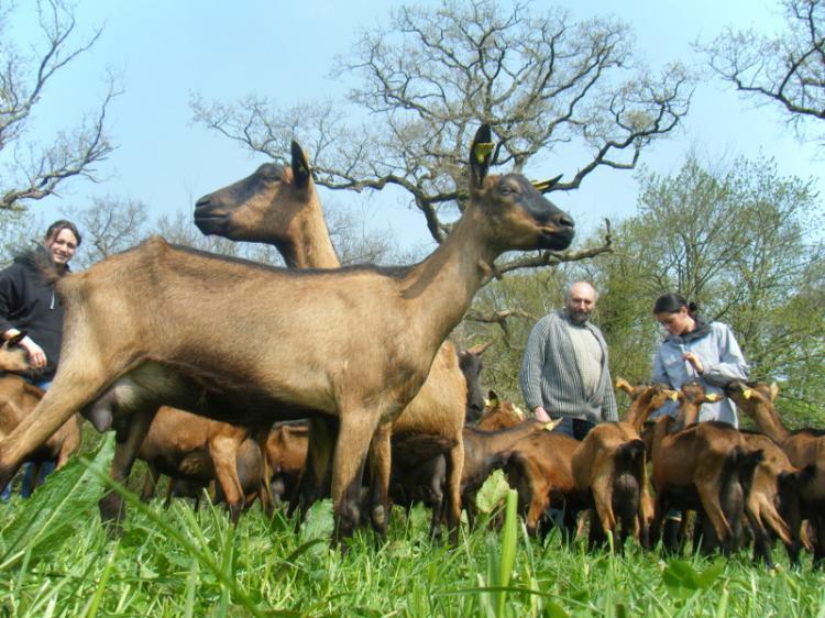 Chèvrerie de la Métairie d'Ardennes