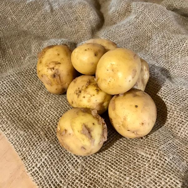 Pommes de terre carolus pour frites et purée