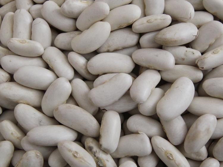 Haricots blancs