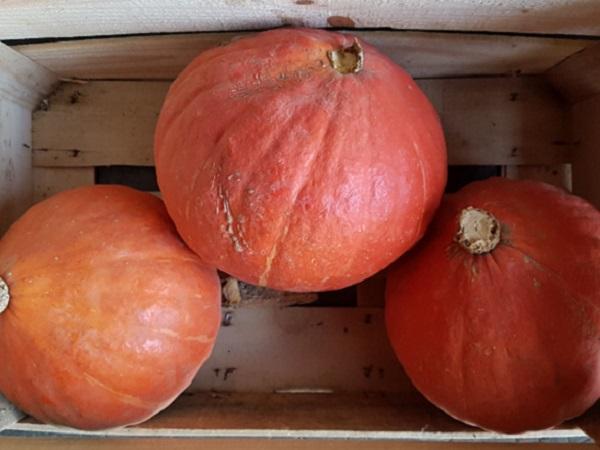 Potimarron (2,5kg en moyenne) EARL du Moulin Grand