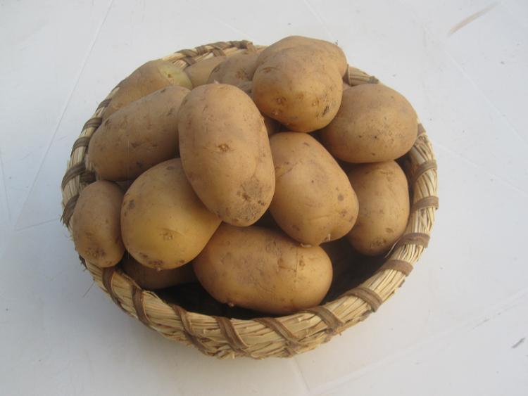 Pomme de terre Amandine  (1kg) des Jardins de Jurlhes