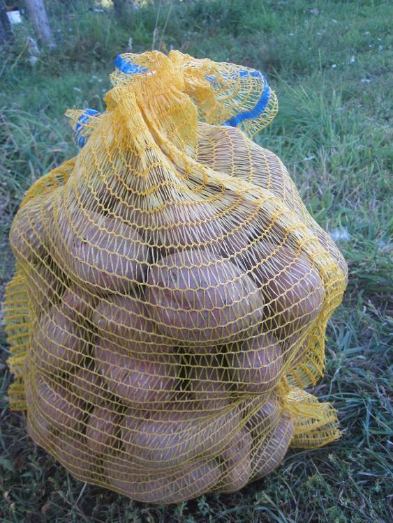 Pomme de terre Rosabelle (5kg) des Jardins de Jurlhes
