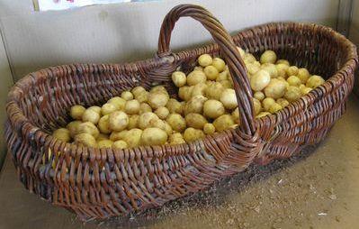Pomme de terre (grenaille) des Jardins de Jurlhes