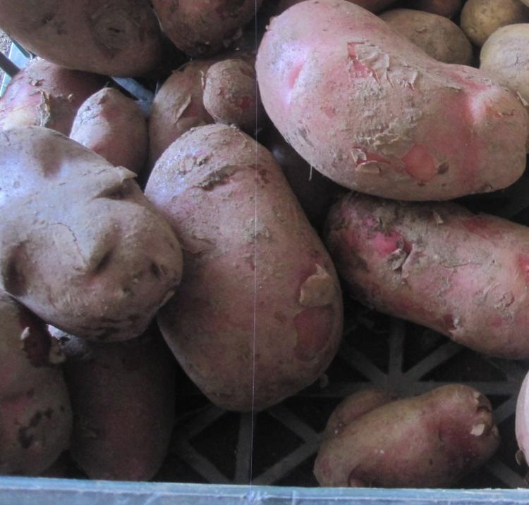 Pomme de terre Rosabelle (1kg) des Jardins  de Jurlhes