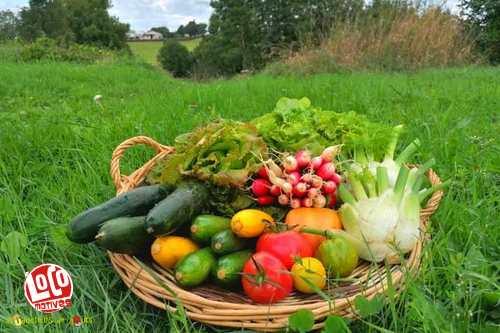 Panier de légumes (2 à 3 personnes)