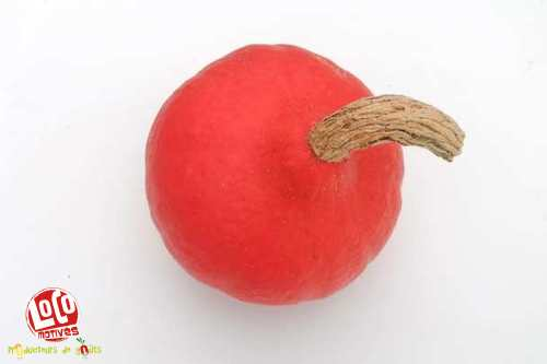 Potimarron  (de 1,4 kg à 1,9 kg)