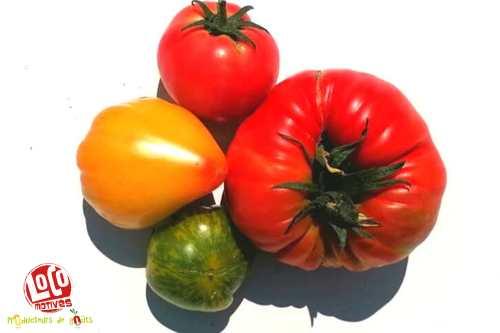 Tomate ancienne à coulis (lot de 3kg)
