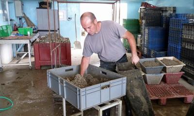 Vincent Bastard, producteur d'huîtres