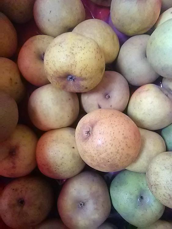 Pomme clocharde - verger de vasles