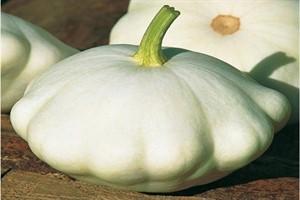 Courge Patisson blanc / White Patisson squash