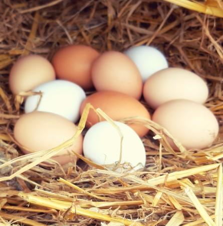 ¼ufs de nos poules