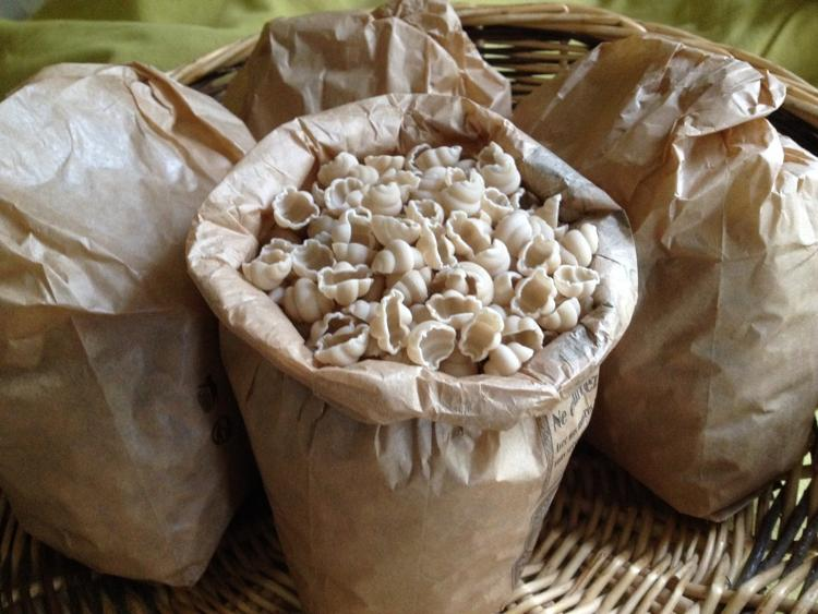 Coquillages de blé tendre