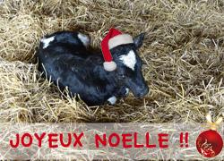 Joyeux NOELLE à tous !!
