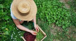 Agriculture bio: l'étude qui révèle enfin son impact positif