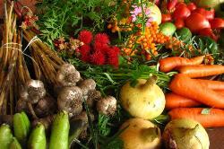 L'agriculture biologique gagne du terrain