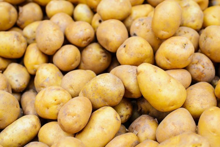 Pommes de terres Rikea, chair tendre (Sulniac)