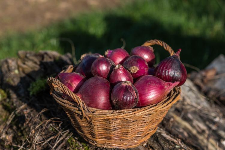Oignons rouges - 500g
