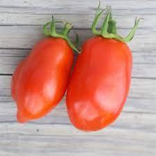 """Tomate Bio Variété """"Roma"""""""