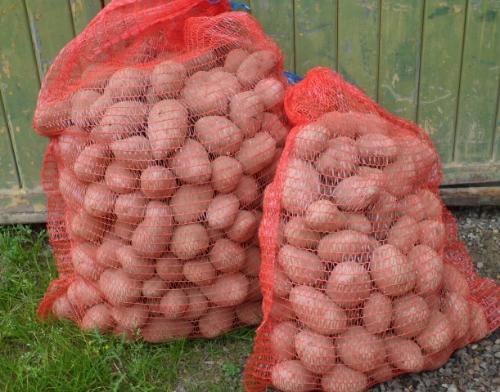 Pommes de terre en filet de 10 kg à chair blanche