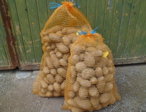 Pommes de terre en filet de 10kg à chair ferme