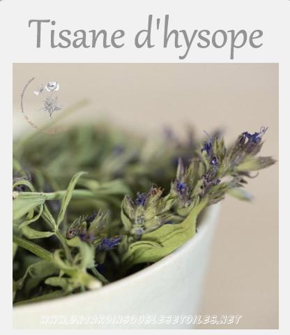 Tisane d'hysope