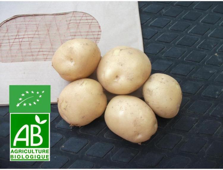 pommes de terre Kerpondy grenailles 2,5 Kg