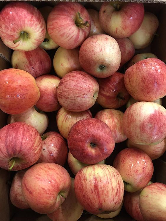 Pommes Gala AB 115gr/150gr 5 kg
