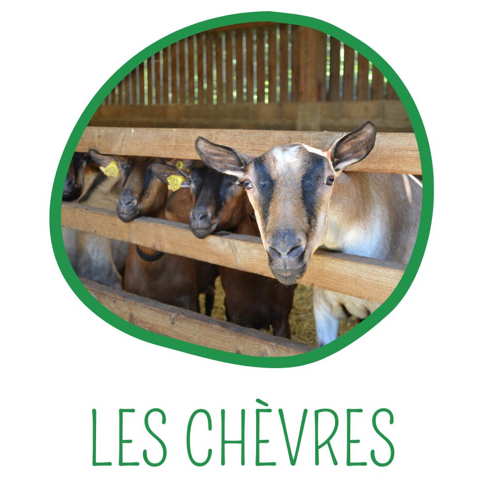 Onglet Les chèvres Ferme Anjou Biquettes