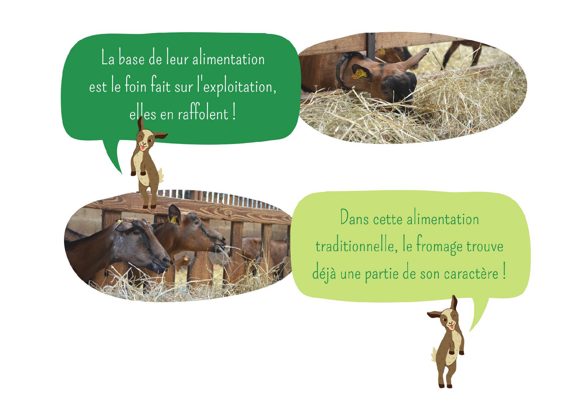 L'élevage et les chèvres Ferme Anjou Biquettes 2
