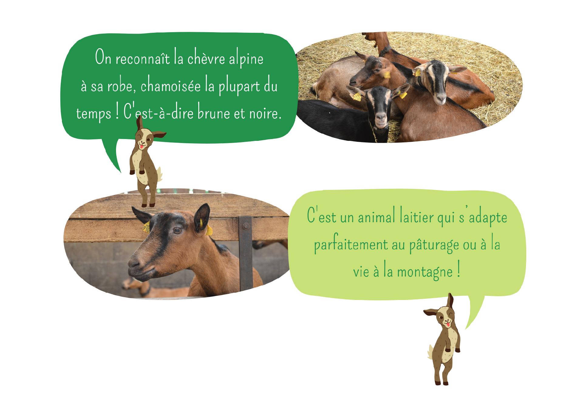 L'élevage et les chèvres Ferme Anjou Biquettes 3