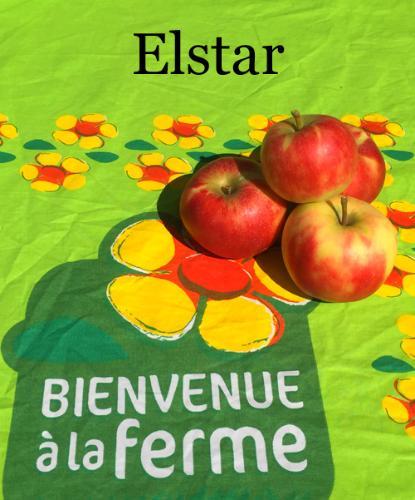 Pommes Elstar 2 Kg